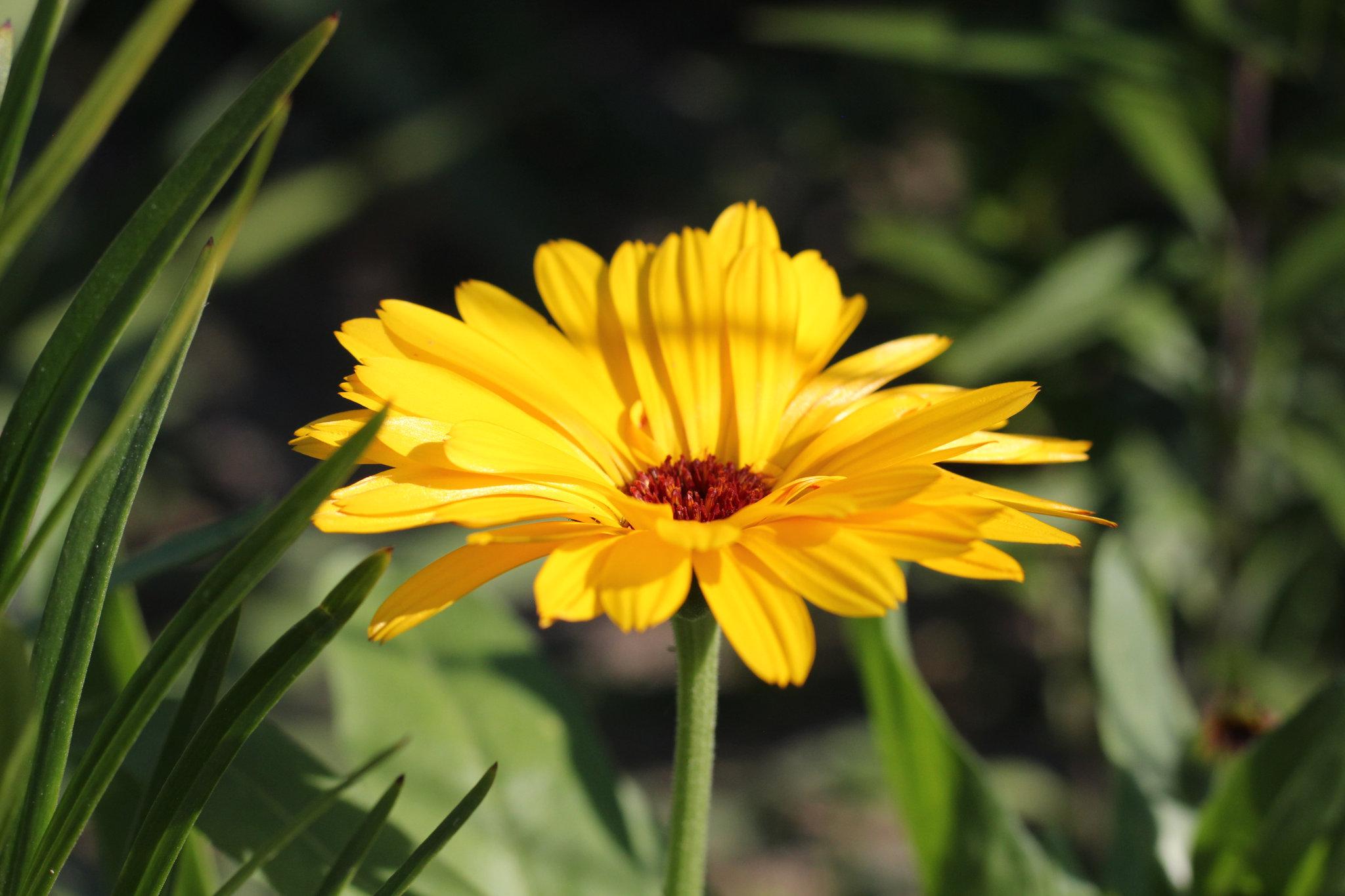 Wiosenny Kwiat Krzyzowka